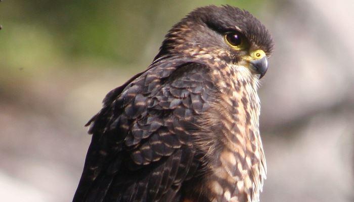 Native birdlife abounds at Moutainview Makarora accomodation